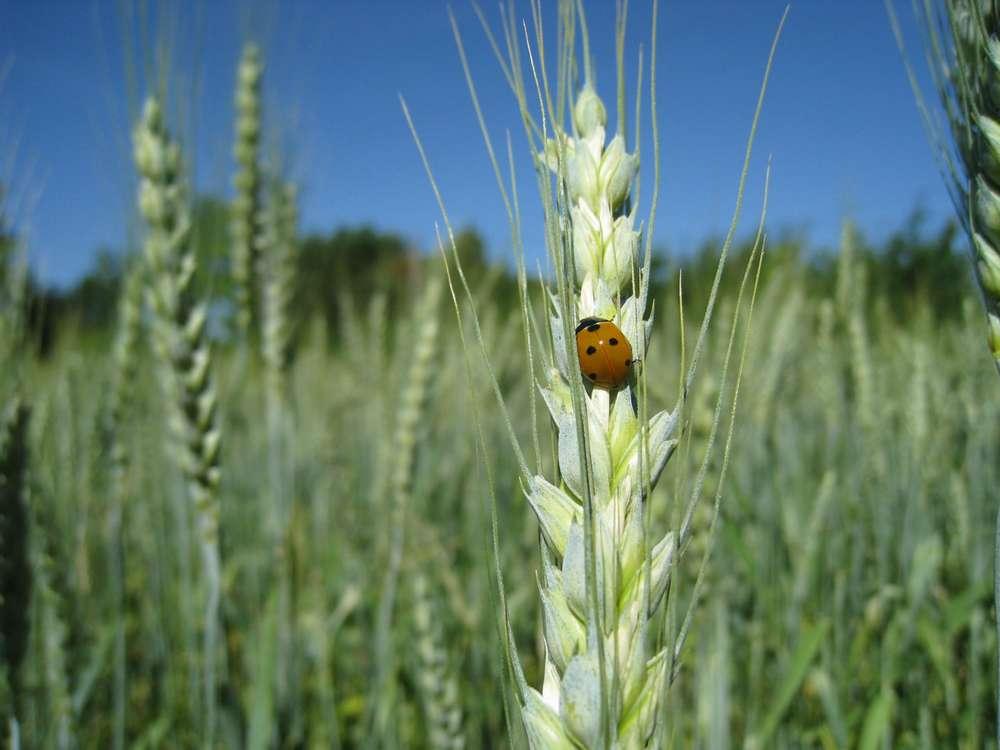 agrar-oekologie