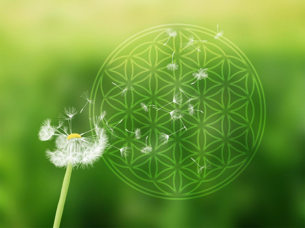 Blume-des-Lebens-Kraft-und-Energie